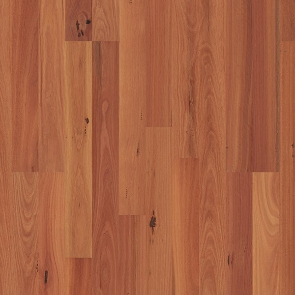 Sydney Blue Gum 2 strip